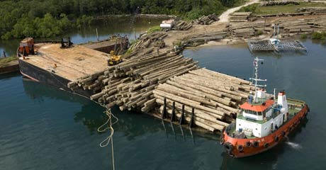 Merbau logs are loaded onto barge in Kaimana, West Papua.